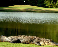 Myrtle Beach-Golf trek-Blackmoor Golf Club