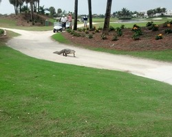 Naples Fort Myers-Golf holiday-Eagle Lakes Golf Club
