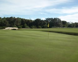 Orlando-Golf outing-Grand Cypress-New Course-Daily Rate