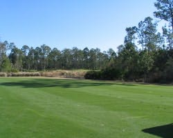 Daytona- GOLF trek-LPGA International - Hills Course-Daily Rate