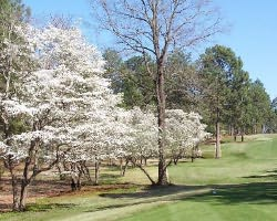Golf Vacation Package - Foxfire Golf & Country Club - West Course