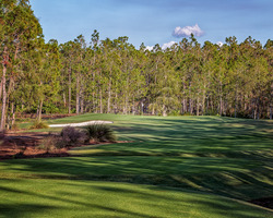 Naples Fort Myers-Golf holiday-Tiburon Golf Club - Black Course-Daily Rate