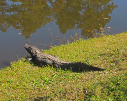 Myrtle Beach-Golf tour-Witch Golf Course