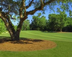 Gulf Coast Biloxi- GOLF travel-The Oaks Golf Club