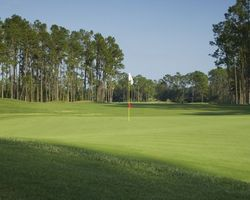 Tampa St Petersburg- GOLF excursion-Saddlebrook Resort - Palmer Course