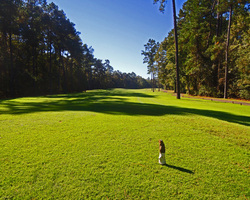 Myrtle Beach-Golf vacation-Witch Golf Course